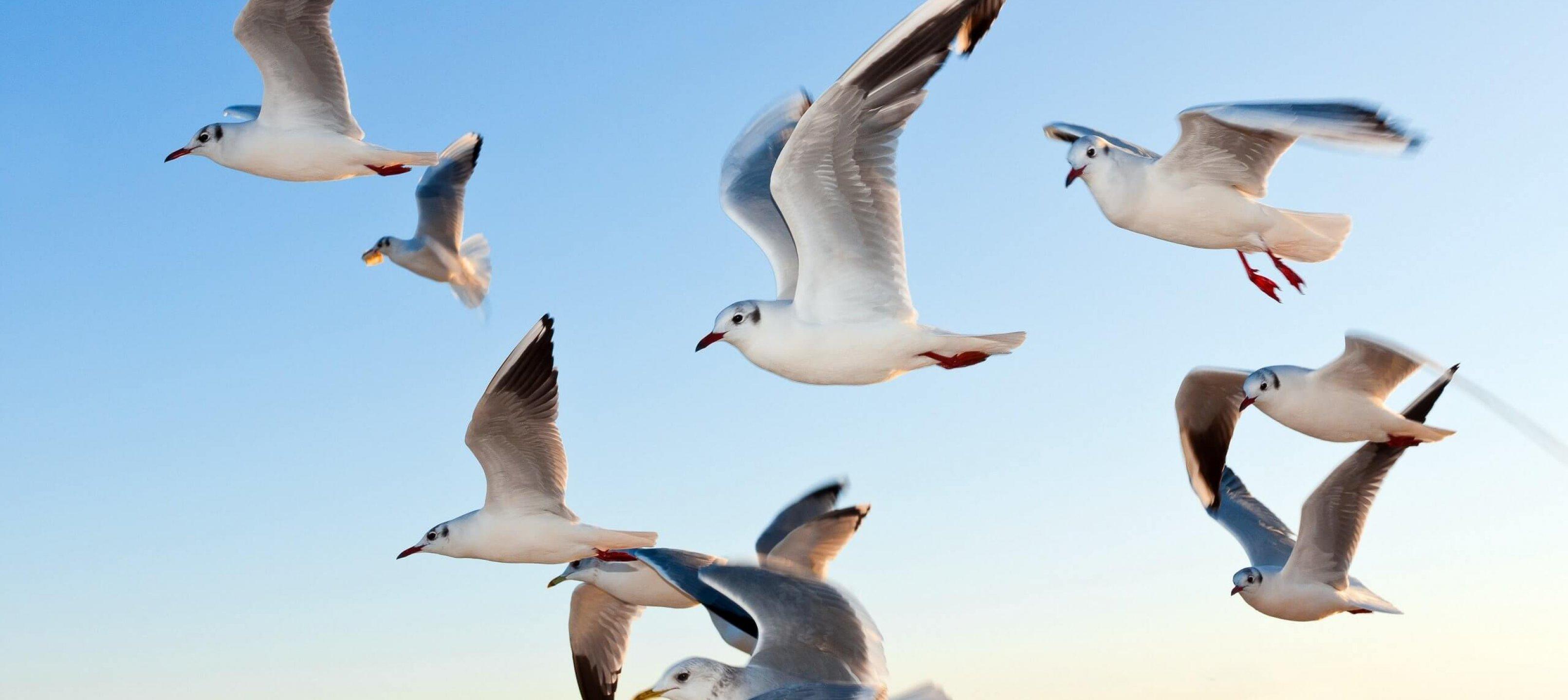 white-seagulls-near-water-54462